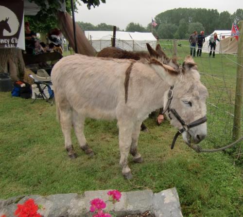 Chièvres 2016 - American Market - Stand Poney d ânes