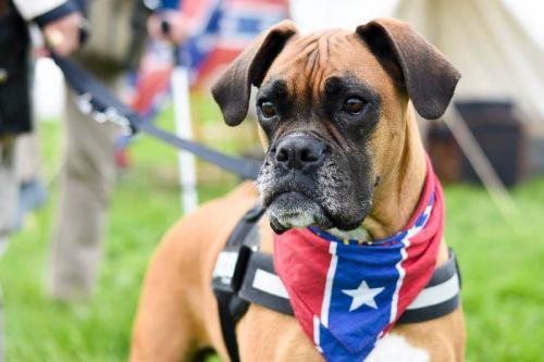 Erquelinnes 2015 - US Dog