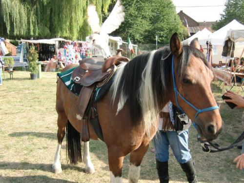 Havré 2019 - Camp ... les chevaux ... hou hou